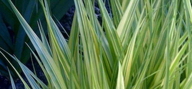 ornamental grasses mobile - Shawn, Northeastern Ontario