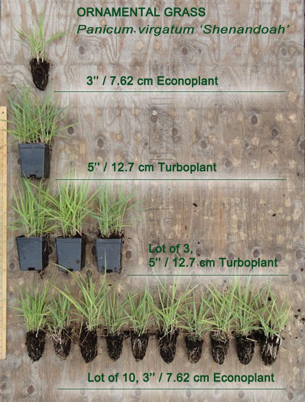 Grass size comparison - Pot Sizes