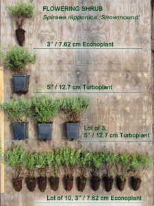 Shrub size comparison 225x300 - How can we help you?