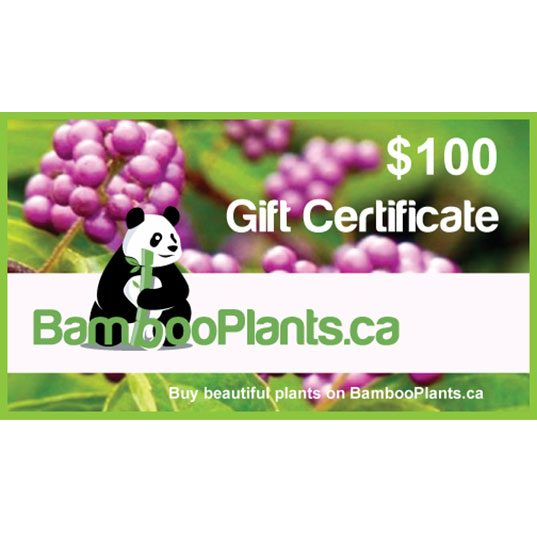 100 bambooplants gift certificate 1 537x537 - Gift Card - $100