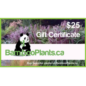 25 bambooplants gift certificate 1 300x300 - Gift Card - $25