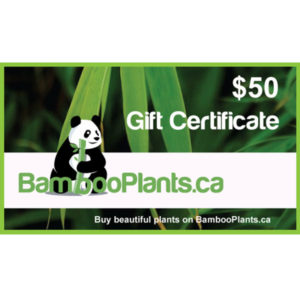 50 bambooplants gift certificate 300x300 - Gift Card - $50