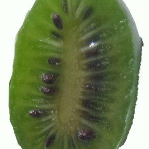actinidia arguta chung bai green kiwi fruit 300x300 - Actinidia arguta 'Chung Bai' (female)