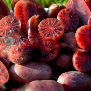 Actinidia arguta 'Purpurna Sadowa' is known for its almost eggplant purple to deep red fruits that last much longer than other varieties.