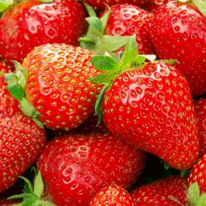 Malwina late-season strawberries bloom and fruit later than almost any strawberry on the market. If your looking for strawberries all season