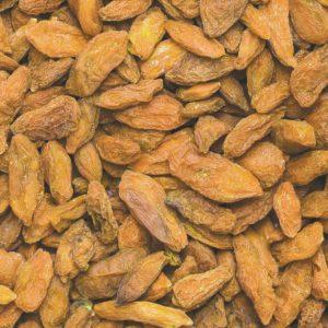lycium barbarum amber sweet goji 300x300 - Lycium barbarum 'AMBER SWEET'