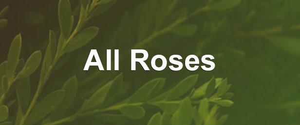 menu all roses 2 -