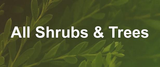 menu all shrubs and trees 2 -